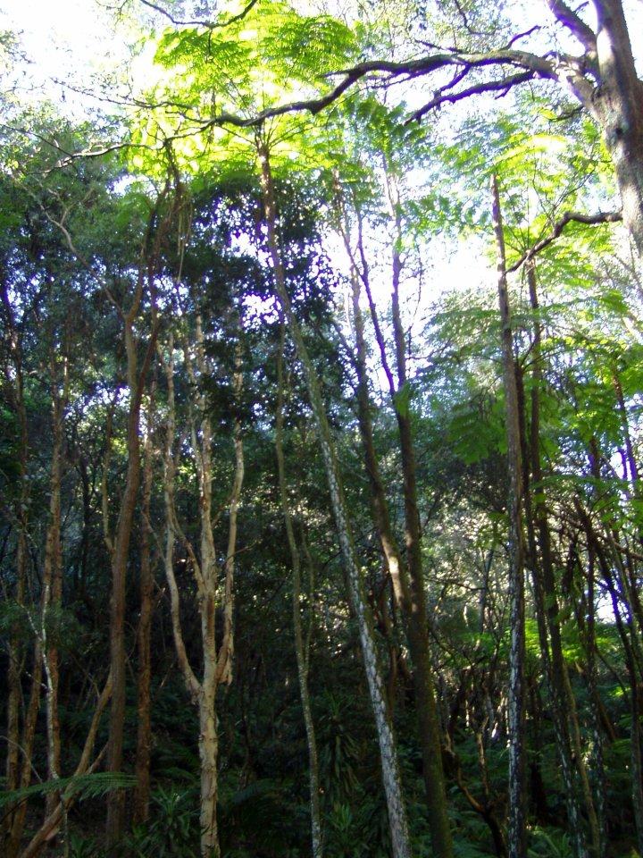 Jako v deštném pralese