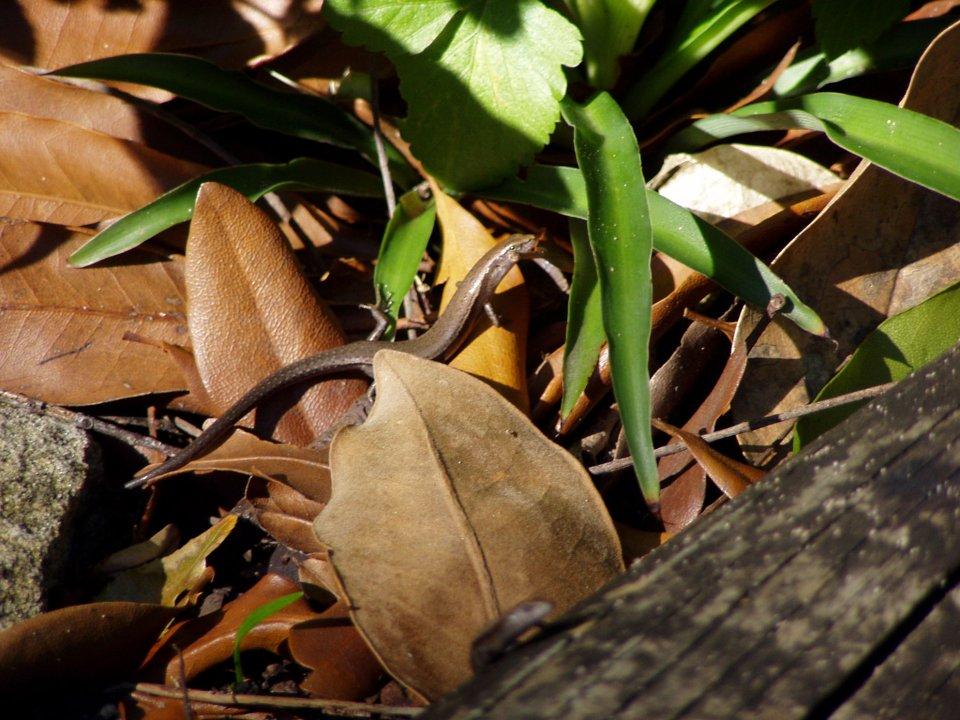 Mrňavé ještěrky